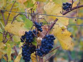Checklist voor het maken van jouw eigen wijn!